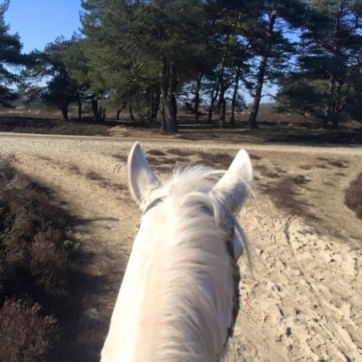 http://sloapenenstoet.nl/wp-content/uploads/2016/12/paarden-1.jpg