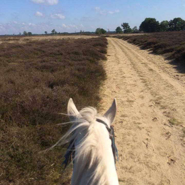 http://sloapenenstoet.nl/wp-content/uploads/2016/12/paarden-2.jpg