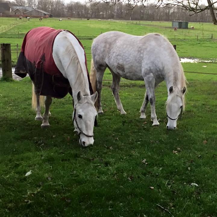 http://sloapenenstoet.nl/wp-content/uploads/2016/12/paarden-4.jpg
