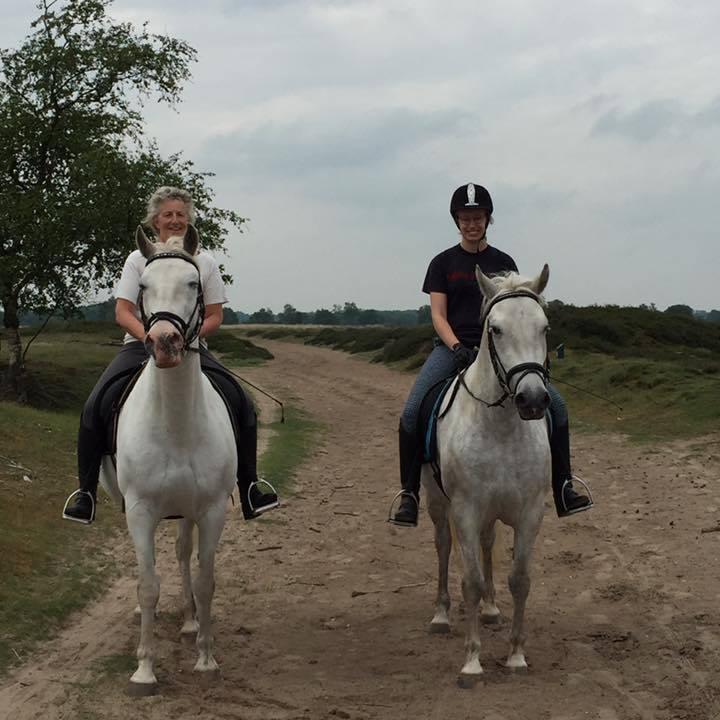 http://sloapenenstoet.nl/wp-content/uploads/2016/12/paarden-5.jpg