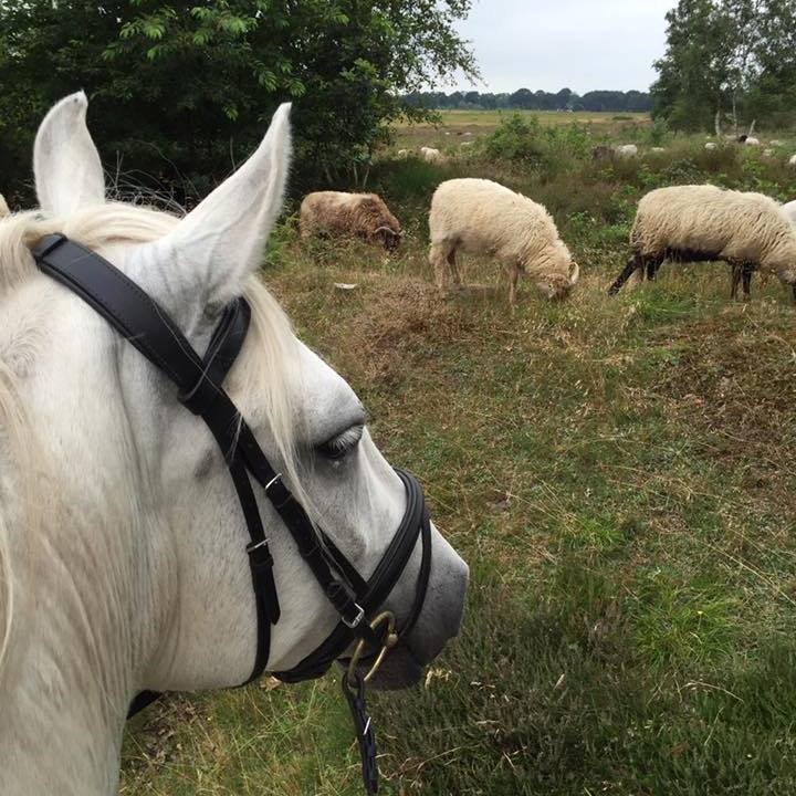 http://sloapenenstoet.nl/wp-content/uploads/2016/12/paarden-6.jpg