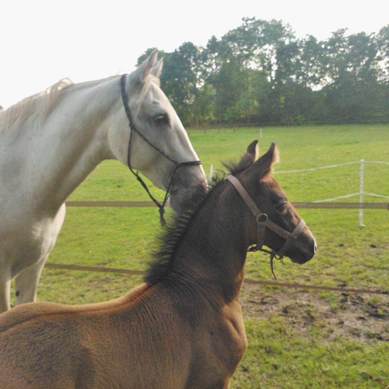 http://sloapenenstoet.nl/wp-content/uploads/2016/12/paarden-7.jpg